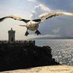 Fotografia artistica - Gabbiano in volo