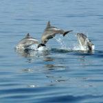 Fotografia artistica - delfini