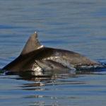 Fotografia artistica - Delfini madre e figlio