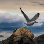 """Fotografia artistica - Foto """"Volo del gabbiano"""""""