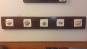 pannello con conchiglie - arte marina